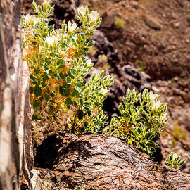 Onyonet  Photo Studios - Green On A Cliff