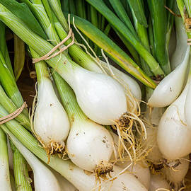 Photographic Arts And Design Studio - Green Onions