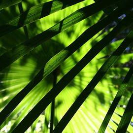 Mo Barton - Green Palm 2
