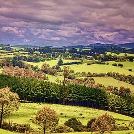 Wallaroo Images - Green Pastures