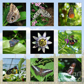 Debra Thompson - Greenhouse Butterflies Collage
