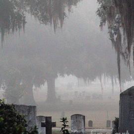 Michael Gavin - Greenwood in Fog