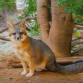 Barbara Manis - Grey Fox