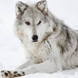 Athena Mckinzie - Grey In The Snow