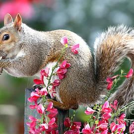 Terri  Waters - Grey Squirrel in the Broom Flowers