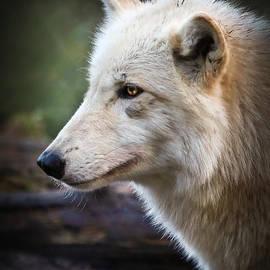 Athena Mckinzie - Grey Wolf
