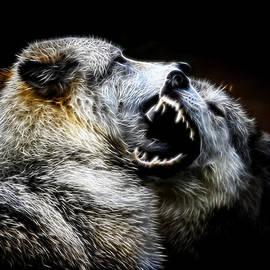 Steve McKinzie - Grey Wolf Fight