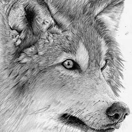 Giorgio  Smiroldo - Grey Wolf