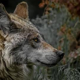 Ernie Echols - Grey Wolf Profile 3