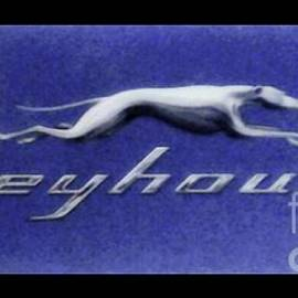 Kelly Awad - Greyhound in Cinerama
