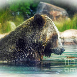 Jim Fitzpatrick - Grizzly Bear Enjoying a Dip in the Water Fade to White Version