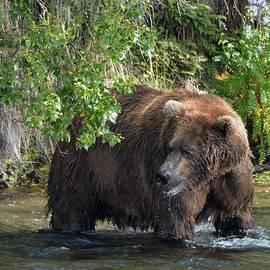 Patricia Twardzik - Grizzly Bear in the Greens