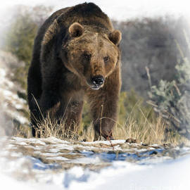 Wildlife Fine Art - Grizzly Bear - Seeking Hibernation
