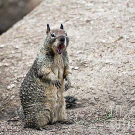 Susan Wiedmann - Ground Squirrel Raising a Ruckus