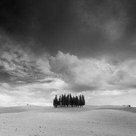 Toma Bonciu - Group of cypresses in Tuscany