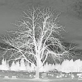 Brad Walters - Guardian Tree Invert
