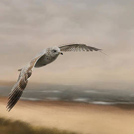 Jai Johnson - Gull At The Shore