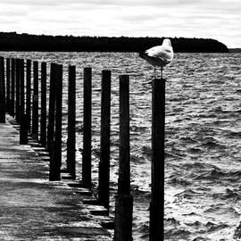 Karen  Majkrzak - Gull on a Gray Day