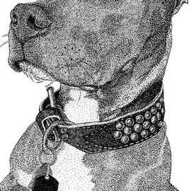 Isabelle Auger - Gunner the Pitbull Portrait