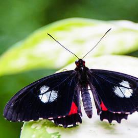 Jukka Heinovirta - Habitat of the Benalmadena Butterfly Park 1