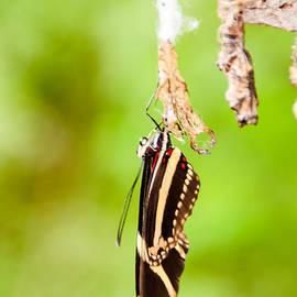 Jukka Heinovirta - Habitat of the Benalmadena Butterfly Park 3