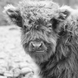 Stephanie McDowell - Hairy Cow Baby