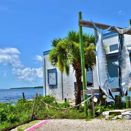 Timothy Lowry - Hanging in Matlacha Florida