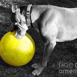 Janice Rae Pariza - Hank and His Big Yellow Horse Ball