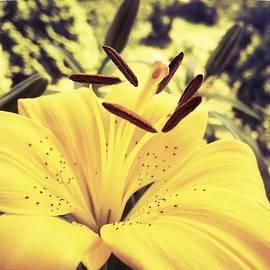 Jennifer Kuehne - Happiness Is A Yellow Lily