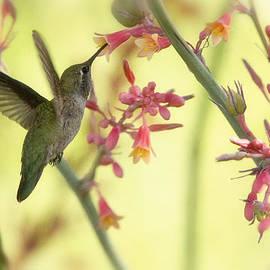 Saija  Lehtonen - Happy As A Hummingbird