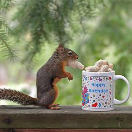 Peggy Collins - Happy Birthday Squirrel