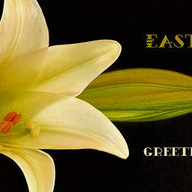 Geraldine Scull   - Happy Easter Greeting Card Lily