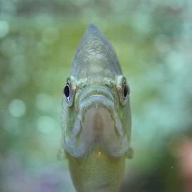 Vicki Spindler - Happy Fish