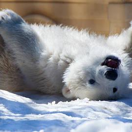 Dora Miller - Happy Polar Bear Cub