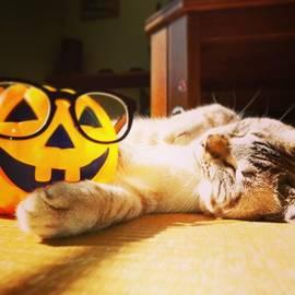Kawashima Megumi - Happyhalloween🐾 #cat#ねこ