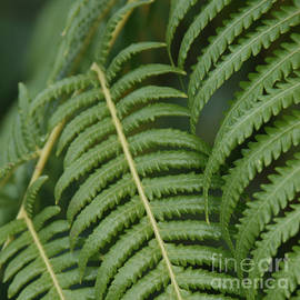 Sharon Mau - Hapuu pulu Hawaiian Tree Fern