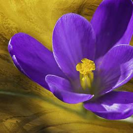 Diane Schuster - Harbinger Of Spring