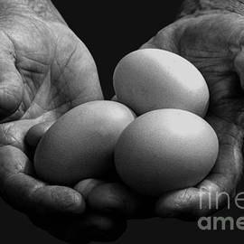 Thomas R Fletcher - Hard-working Hands Gathering Eggs