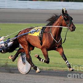 Dwight Cook - Harness Racing 5