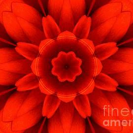 Elizabeth McTaggart - Harvest Bloom