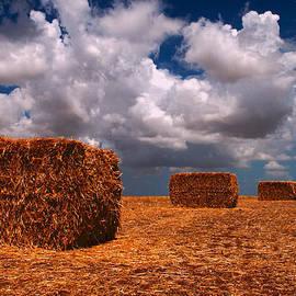 Meir  Jacob - Harvest in Israel