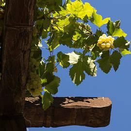 Georgia Mizuleva - Harvest in the Sky - Ripe Grapes Glow
