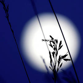Jim Garrison - Harvest Moon