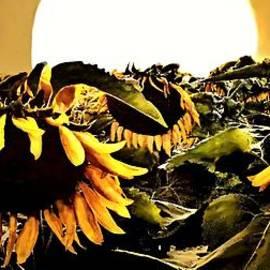 Danielle  Parent - Harvest Moon Over A Sunflower Farm