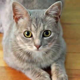 Cynthia Guinn - Hattie The Kitty