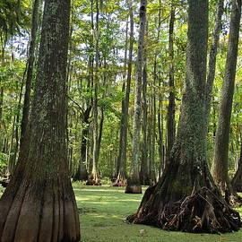 Swamp Hare Photography - Haunting Louisiana Cypress Swamp