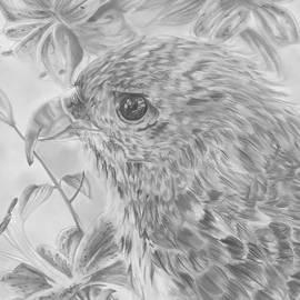 Raquel Ventura - Hawaiian Hawk