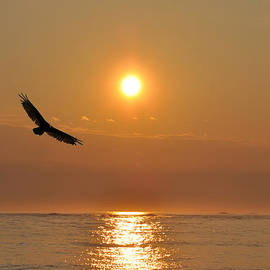 Bill Cannon - Hawk Flying at Sunrise
