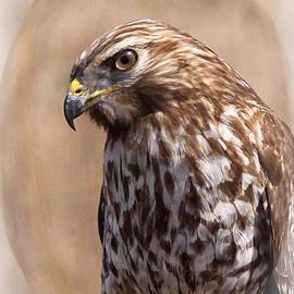 Travis Truelove - Hawk - Sphere - Bird