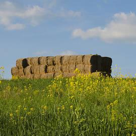 Bill Cannon - Hay Bales in a Field